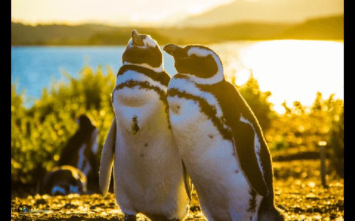 Caminhada com Pinguins + Navegação - Verão - Ushuaia
