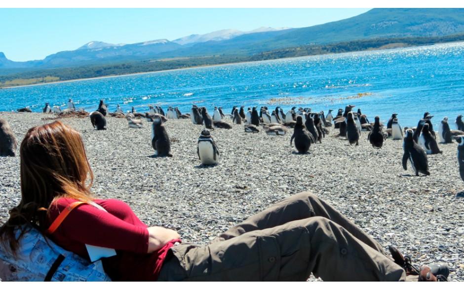 Pinguinera Terrestre Tarde