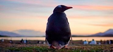 Caminhada com Pinguins + Navegação - Inverno - Ushuaia