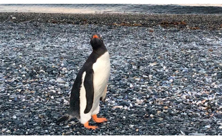 Caminhada com Pinguins + Navegação Inverno