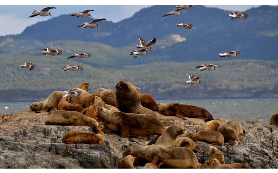 Caminhada com Pinguins + Navegação Verão