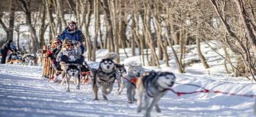 Aventura y Nieve con Trineo - Ushuaia