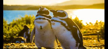 Caminata con Pingüinos + Navegación - Verano - Ushuaia