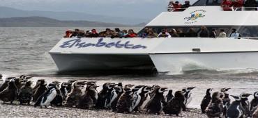 Navegación Canal Beagle + Pinguinera - Ushuaia