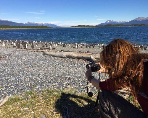 Ushuaia - Pinguinera Terrestre