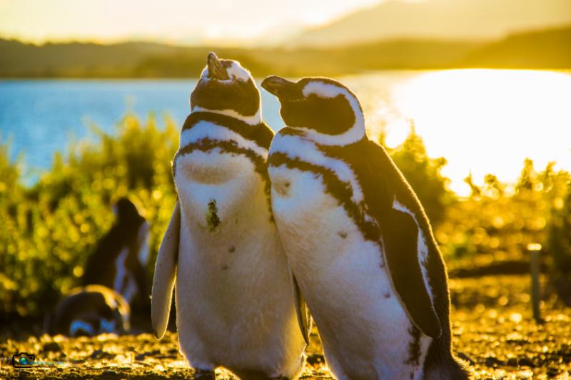 Pinguins Ushuaia