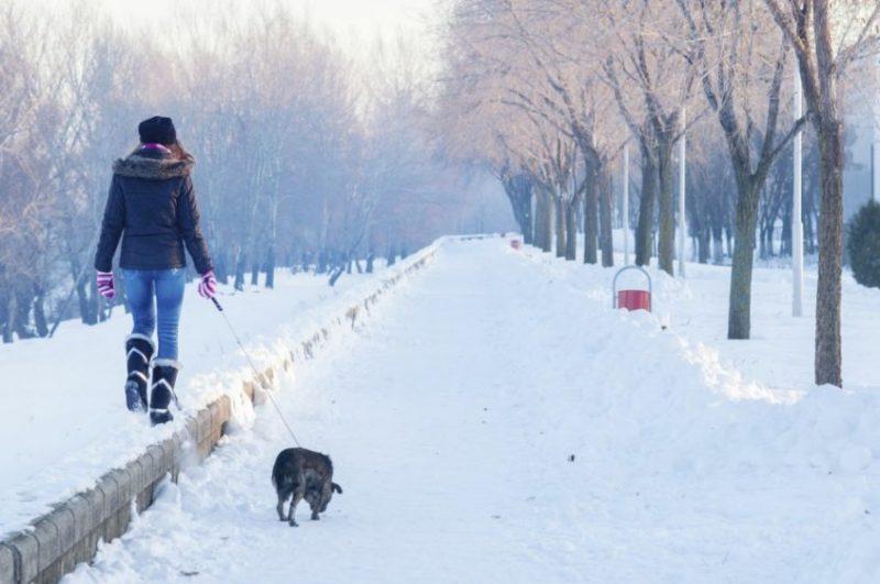 mulher passeando com cachorro no inverno