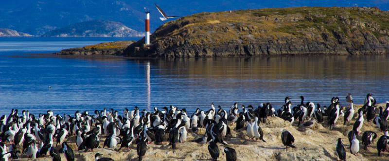 cormoranes - pinguins em Isla Martillo