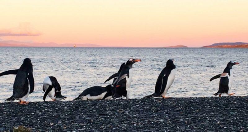 passeio com pinguins em ushuaia