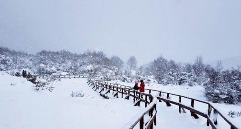 Inverno em Ushuaia - Dois turista caminhando em uma passarela cheia de neve e arvores ao fundo cobertas por neve