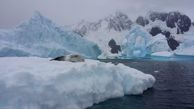 Cemitério de Icebergs Antártida