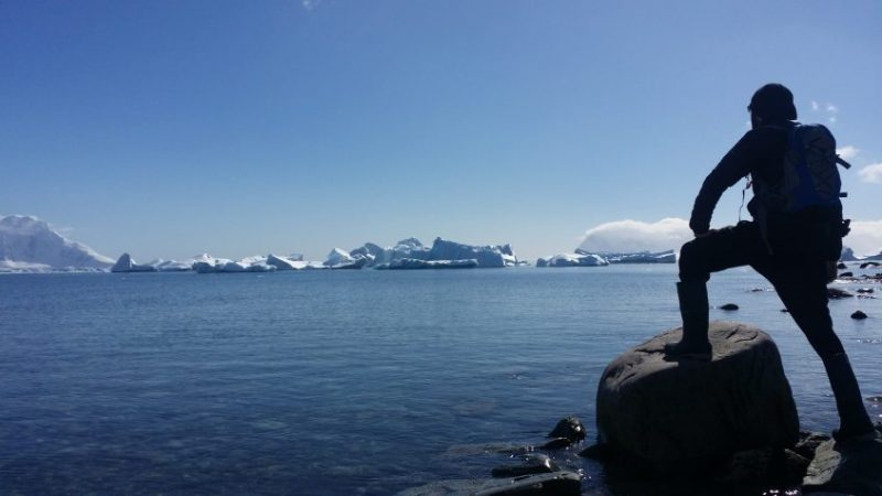 Cuverville Antártida
