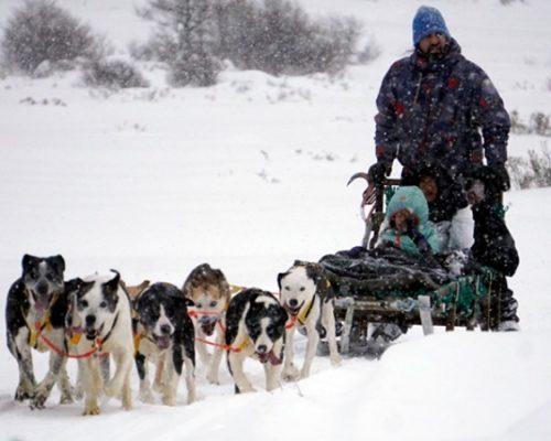 Família sendo carregada por cachorros no trenó durante o inverno em Ushuaia