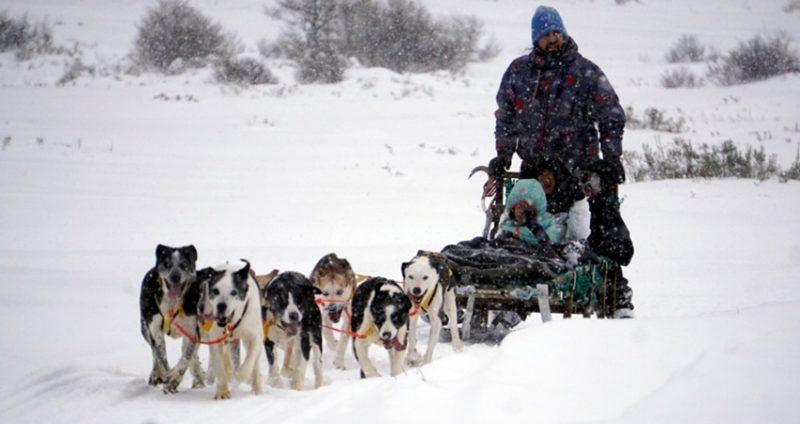 roteiro três cidades - Passeio no trenó com cães durante o inverno em Ushuaia